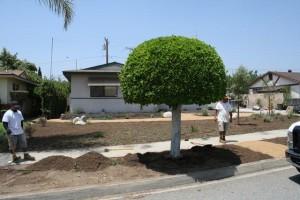 Landscaping work 65