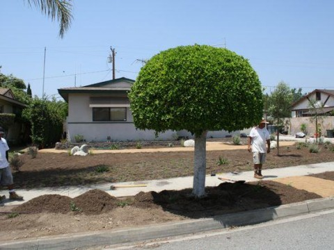 Landscaping work 65