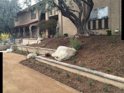 Landscaping work 161